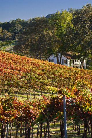 Fall_vineyard_home_3864_2396