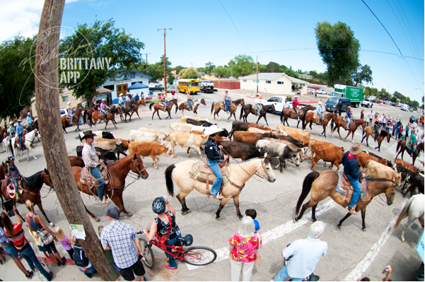Cattle Drive_2012