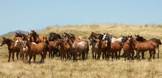 Colts in Field-Horsemen's Re-Union Photo 2012