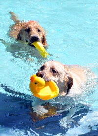 Dog Splash Days