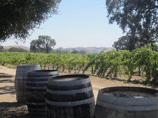 Barrels at Peachy Canyon